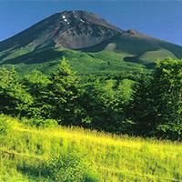 富士山下花草树木大自然风景图片