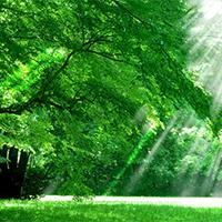 参天树木阳光明媚的图片风景