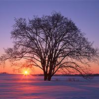 树木风景黄昏唯美意境图片