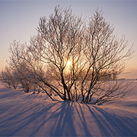 雪山风景唯美树木图片
