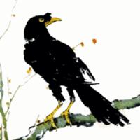 乌鸦黑白动漫动态图片