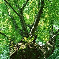 绿色护眼唯美树木图片欣赏