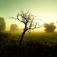 树木唯美阳光绿色意境图片