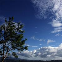唯美意境蓝天白云植物图片