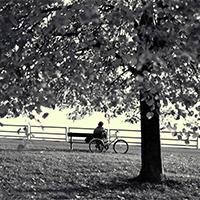 树木意境落寞的唯美图片壁纸