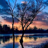 树木意境唯美天边的晚霞图片