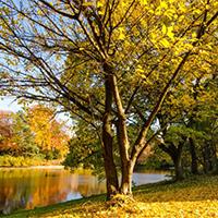 大自然唯美秋天的树木图片