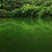 绿色树木意境清幽的图片