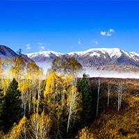 秋天意境金黄树木风景图片