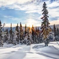 冬日云杉树木葱茏风景唯美图片