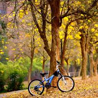 金色的秋天唯美森林树木图片
