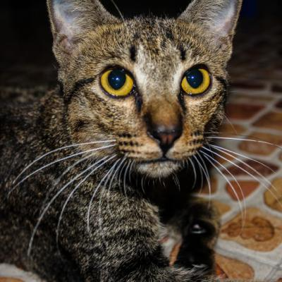萌宠小猫qq可爱头像