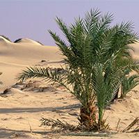 撒哈拉沙漠干涸风景图片