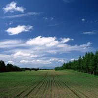 蓝天白云意境辽阔的青青草原图片