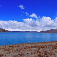 蓝天白云草地羊群大自然景色图片