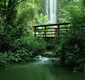 静谧森林风景图片绿色养眼唯美壁纸