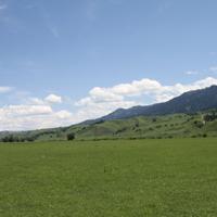 绿色的大草原一棵树木图片